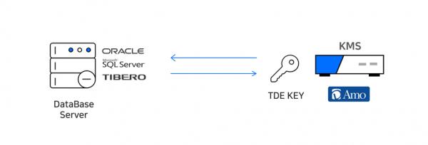 D'Amo KMS TDE Key